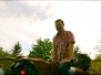 Ochs-Riding im Stadtgarten