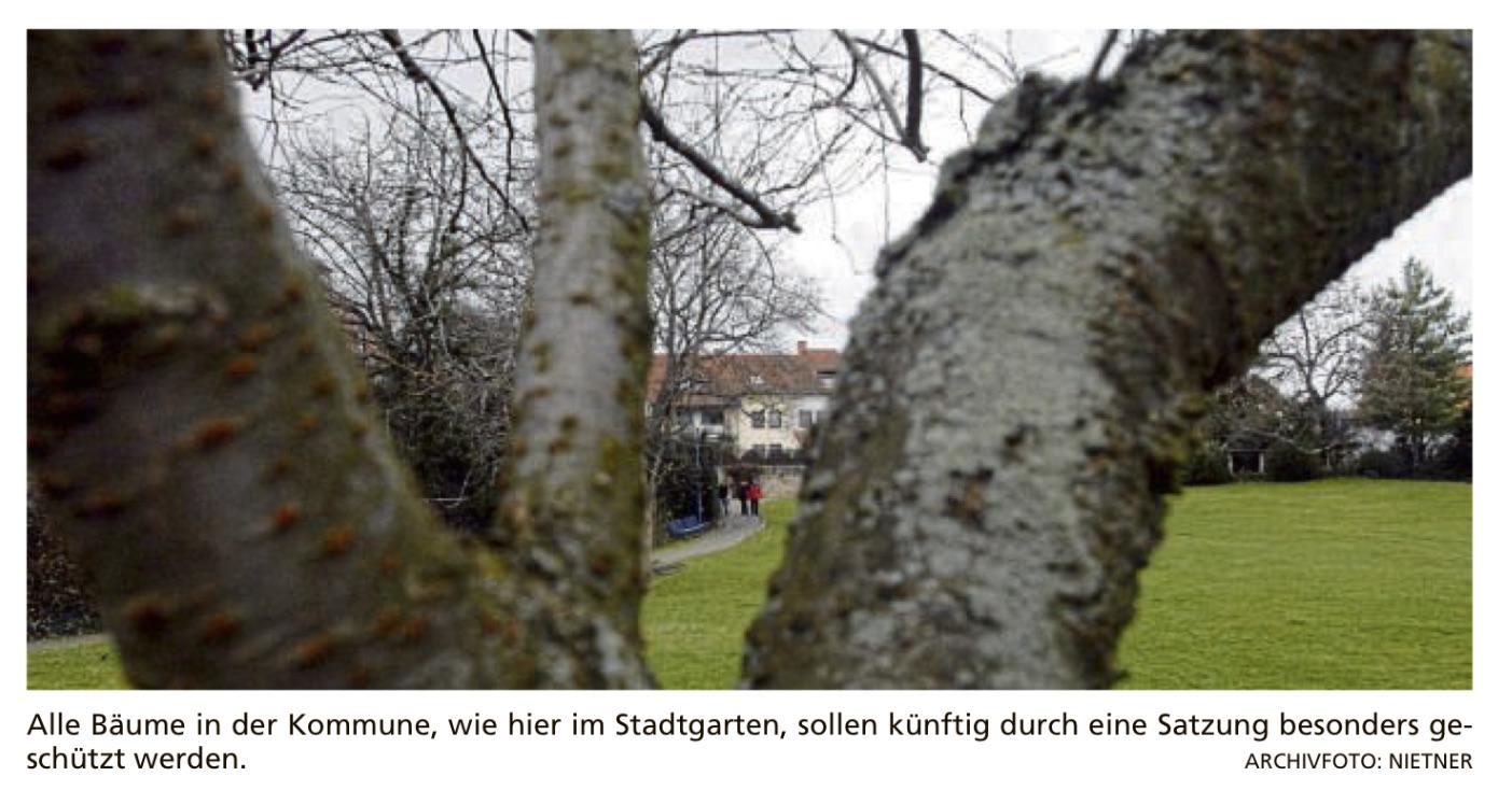 Höchster Kreisblatt: Satzung für Baumschutz wird nun doch geprüft